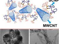 25- Single‐Chain Folding Nanoparticles as Carbon Nanotube Catchers